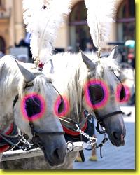 hem-hayati-hem-kendini-anlamak-ve-sevmek-horses