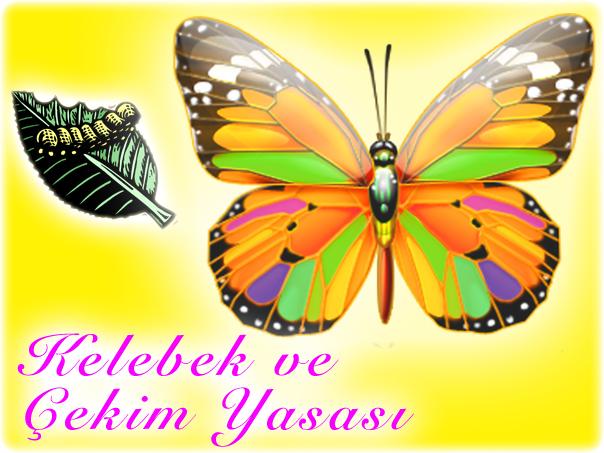 kelebek-ve-cekim-yasasi